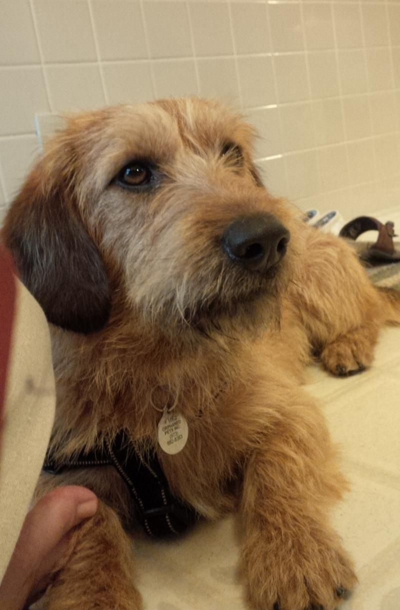Adopt Amos On Petfinder Scruffy Dogs Small Pets Dog Adoption