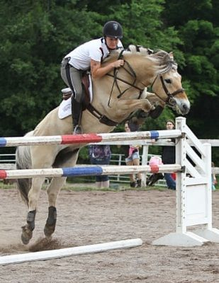 Horse Fjord jumping pictures images