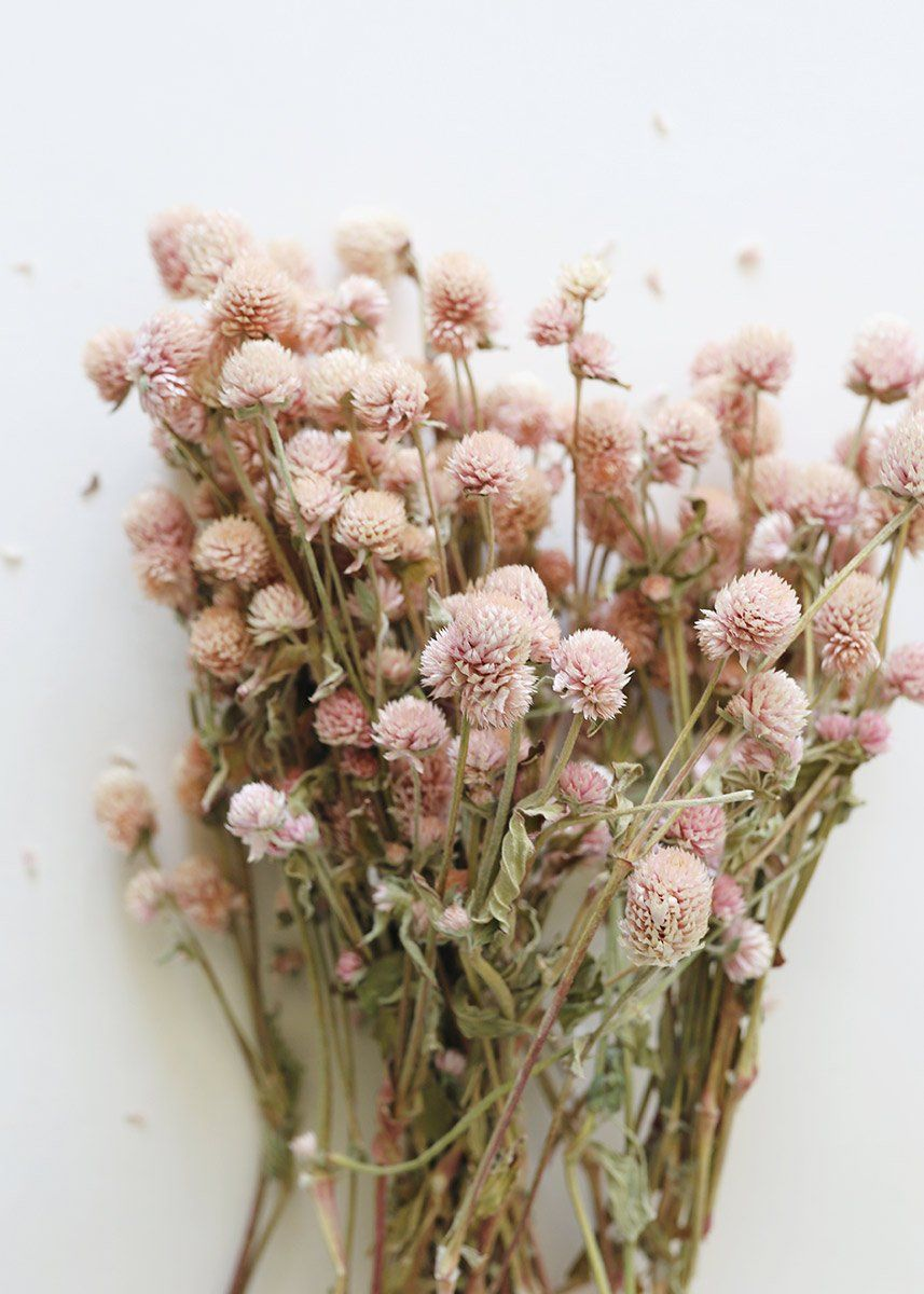 Find beautiful dried wedding flowers for your DIY wildflower bridal bouquets at Afloral.com. Add these pretty soft pink globe amaranth natural flowers. Due to the nature of this product, color and size will vary.  Light Pink 14