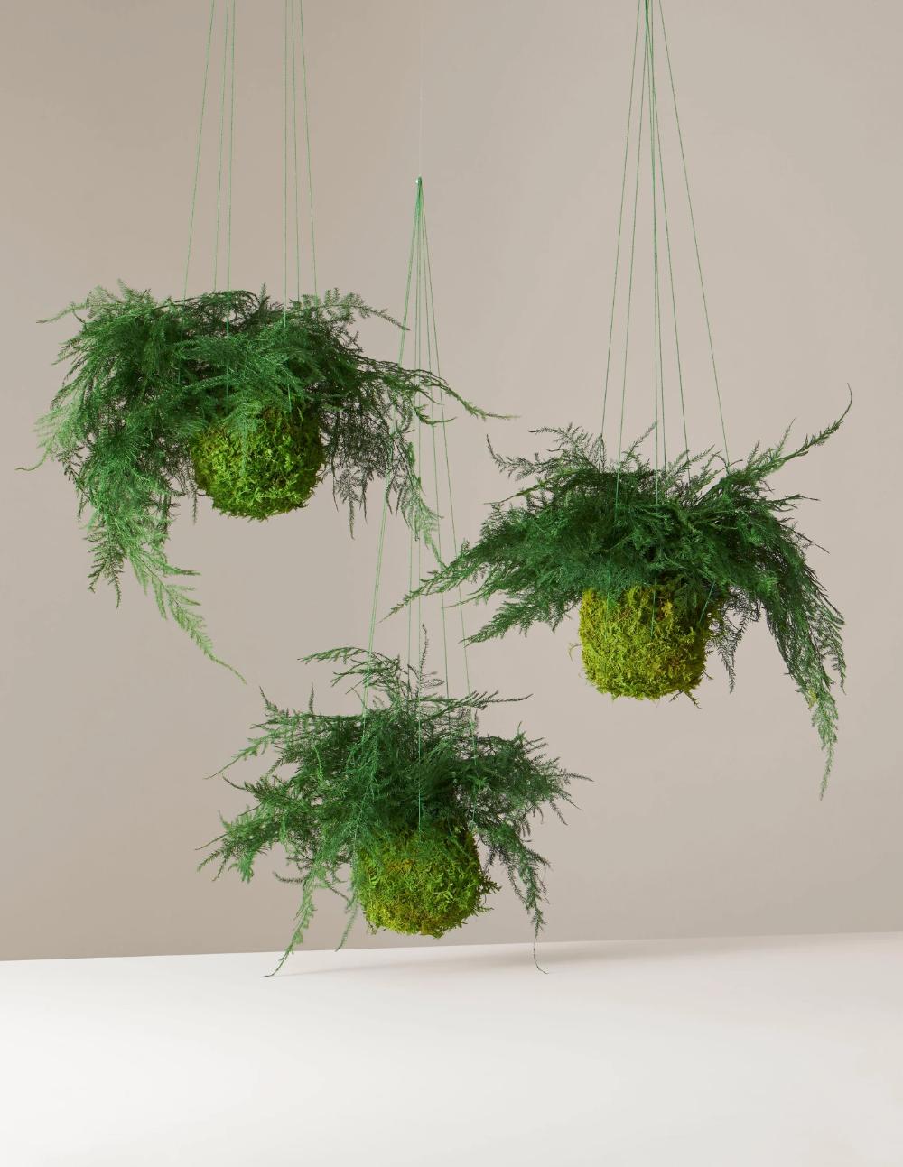 Preserved Fern Kokedama Hanging Plants Plant Design Kokedama