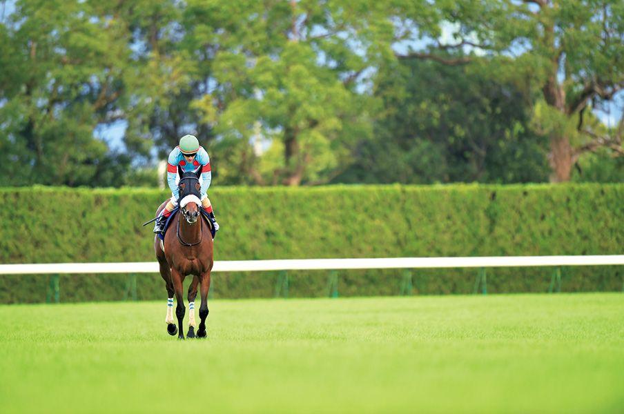 アーモンドアイ アーモンドアイ 馬 美しい馬