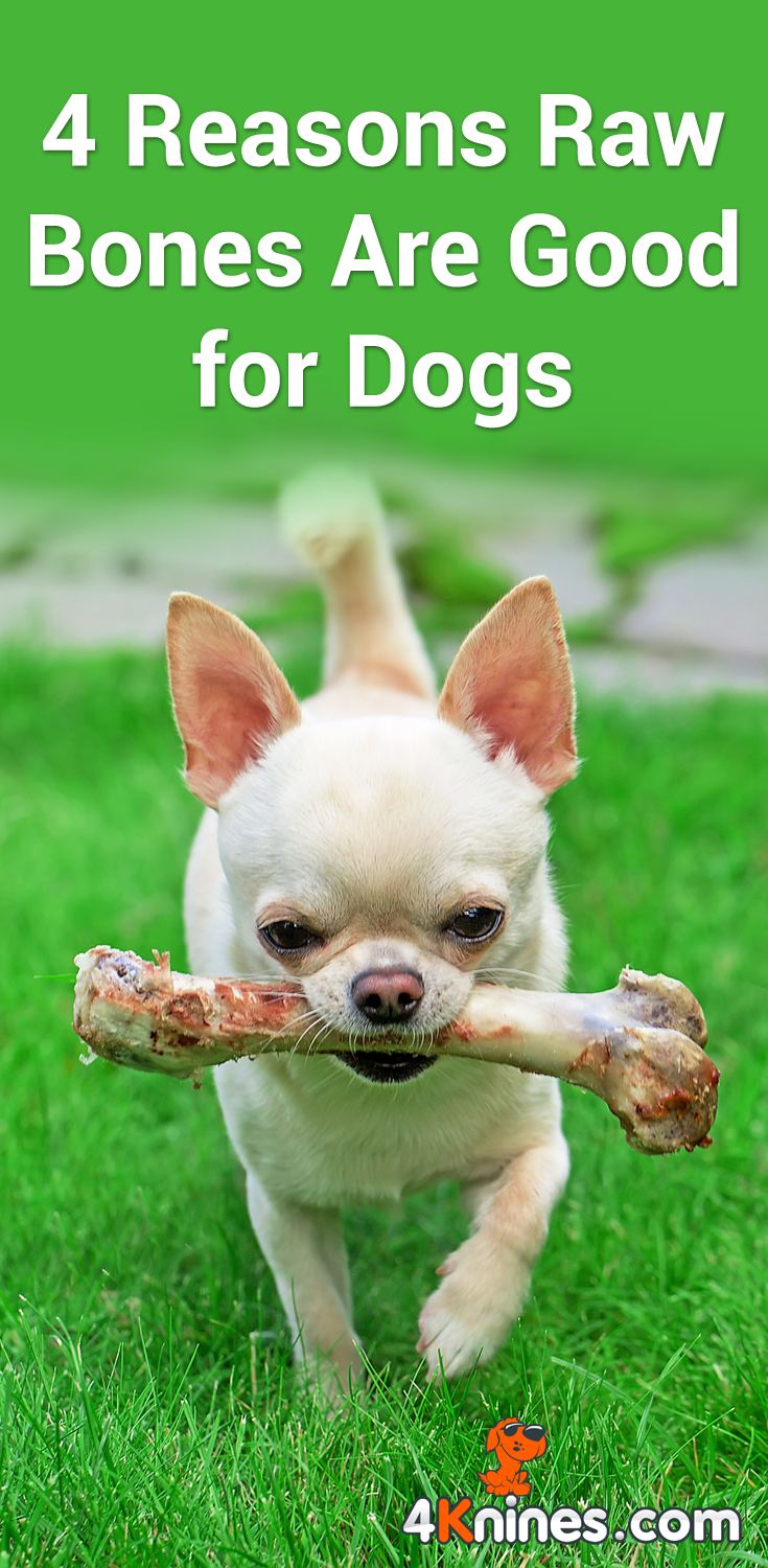 4 Reasons Raw Bones Are Good for Dogs   Dogs, Dog trainer ...