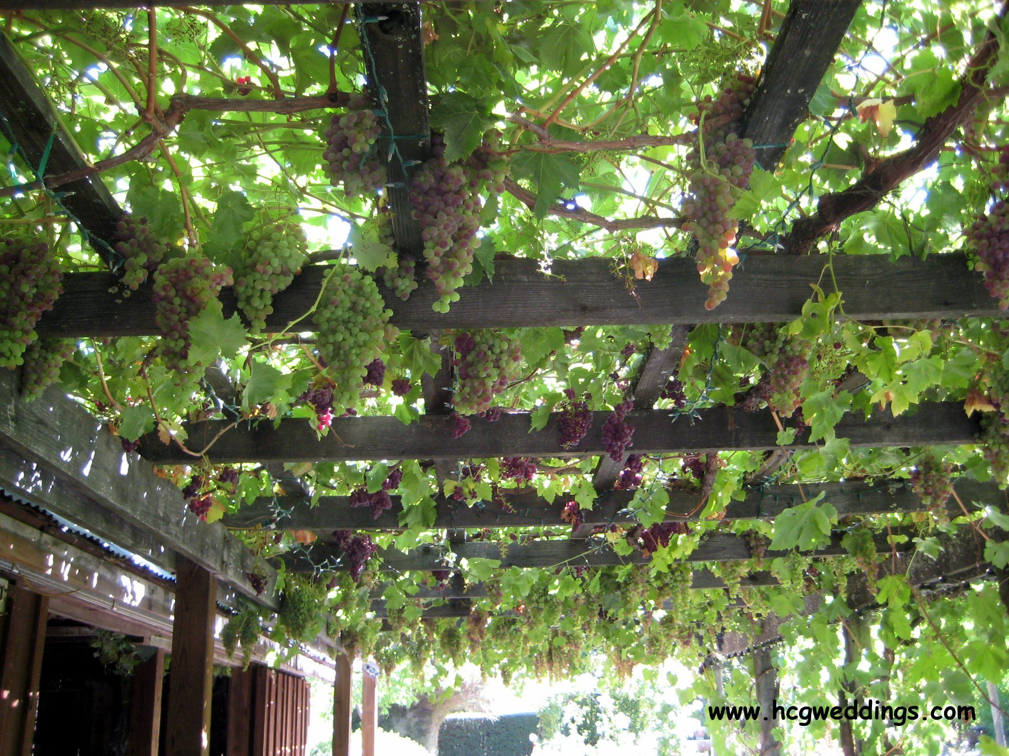 A terrace wraps around the barn with a grape arbor it is for Plants for outdoor garden