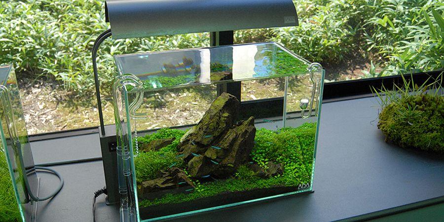 Ada Clear Super Shrimp Fish Planted Aquarium Tank Pretty And Colorful Fish & Aquariums