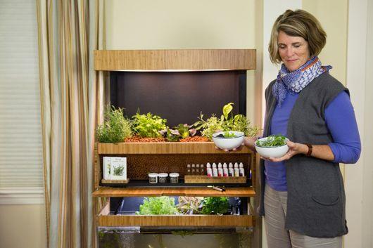 Plante sua comida no próprio apartamento - Prósper Comunicação