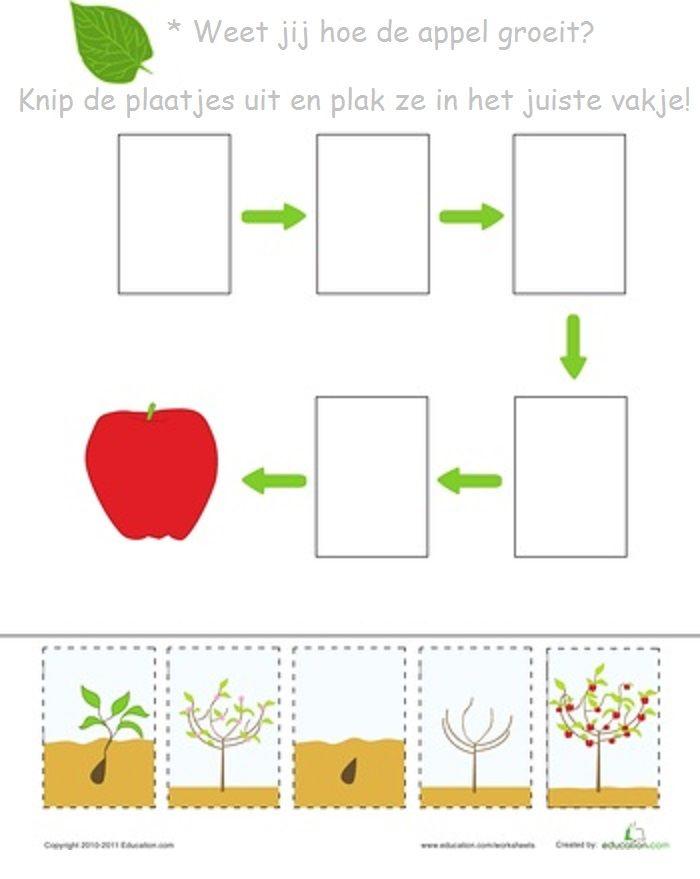 Weet jij hoe een appel groeit?   logische reeksen   Pinterest