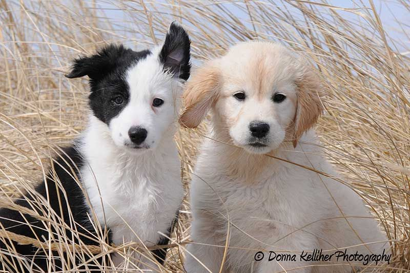 Wordless Wednesday 4 6 Cute Dogs Cute Creatures Puppies