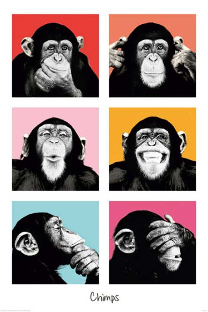 Empire 409256 The Chimp - Pop Poster - 61 x 91.5 cm | Draw/Desing ...