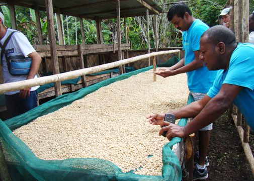 Read all about Sacred Grounds staff's trip to visit Fairtrade farmers in PNG here. So many stories!