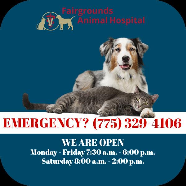 Pin On Fairgrounds Animal Hospital
