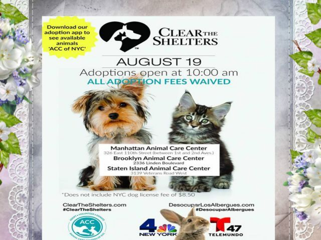 Acc Will Be Participating In The National Clear The Shelter Adoption Event Tomorrow Saturday 08 19 Due To This Event There Will Be No At Risk List Tonight F Met Afbeeldingen