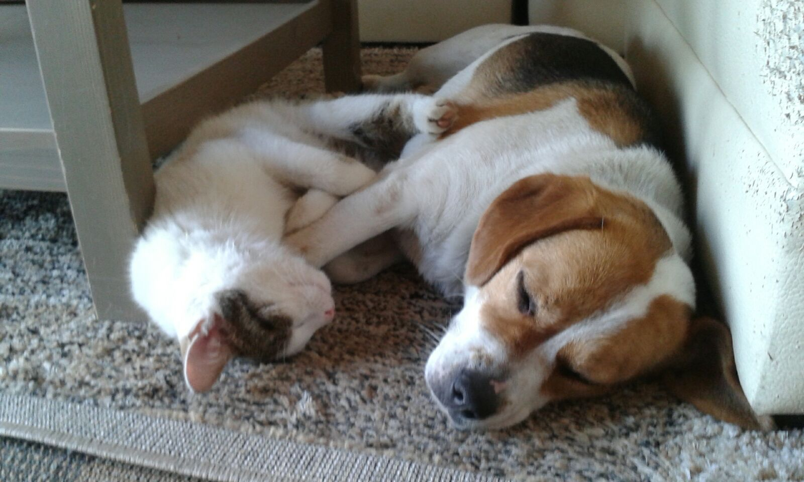 My cat and dog sleeping together https//ift.tt/2NwgZYM