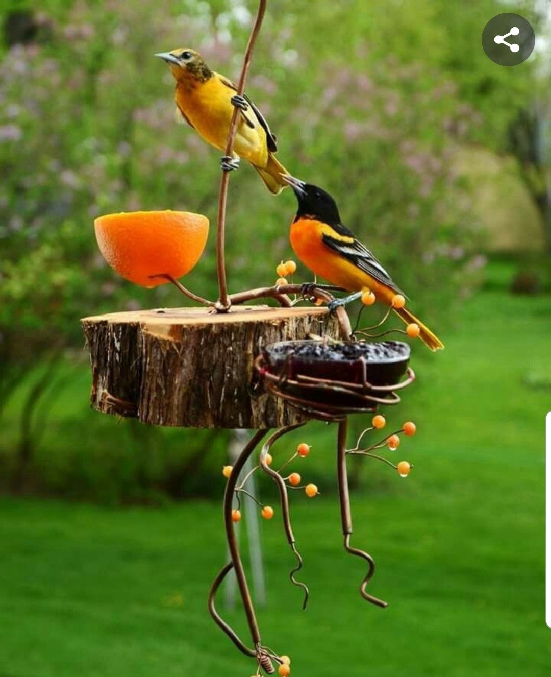 Pin By Dana Napier On Attracting Birds & Bees (& Other