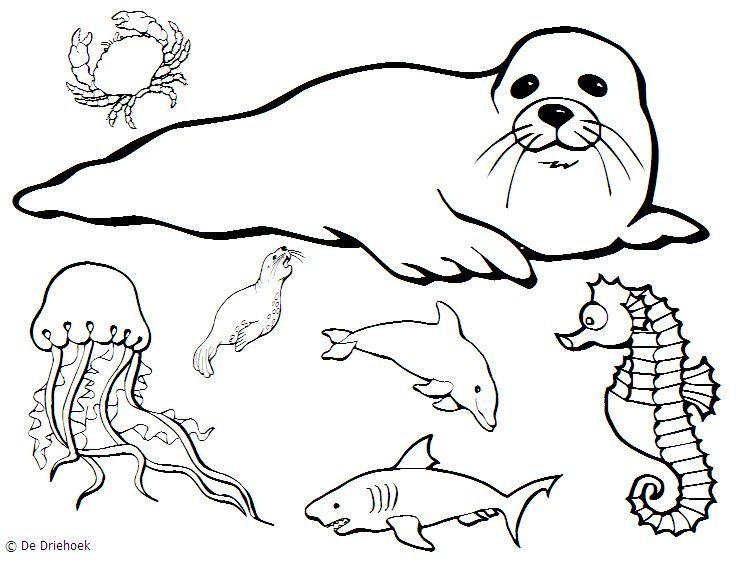 sealife shoe box zeedieren kleurplaten en tekenen
