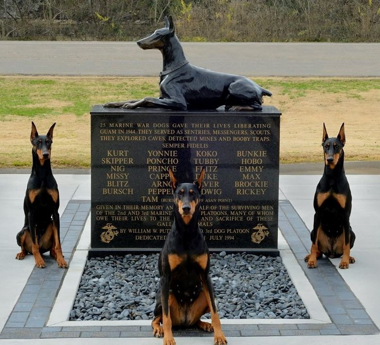 Dobermans A Banned Breed Also A Breed That Fought For You And