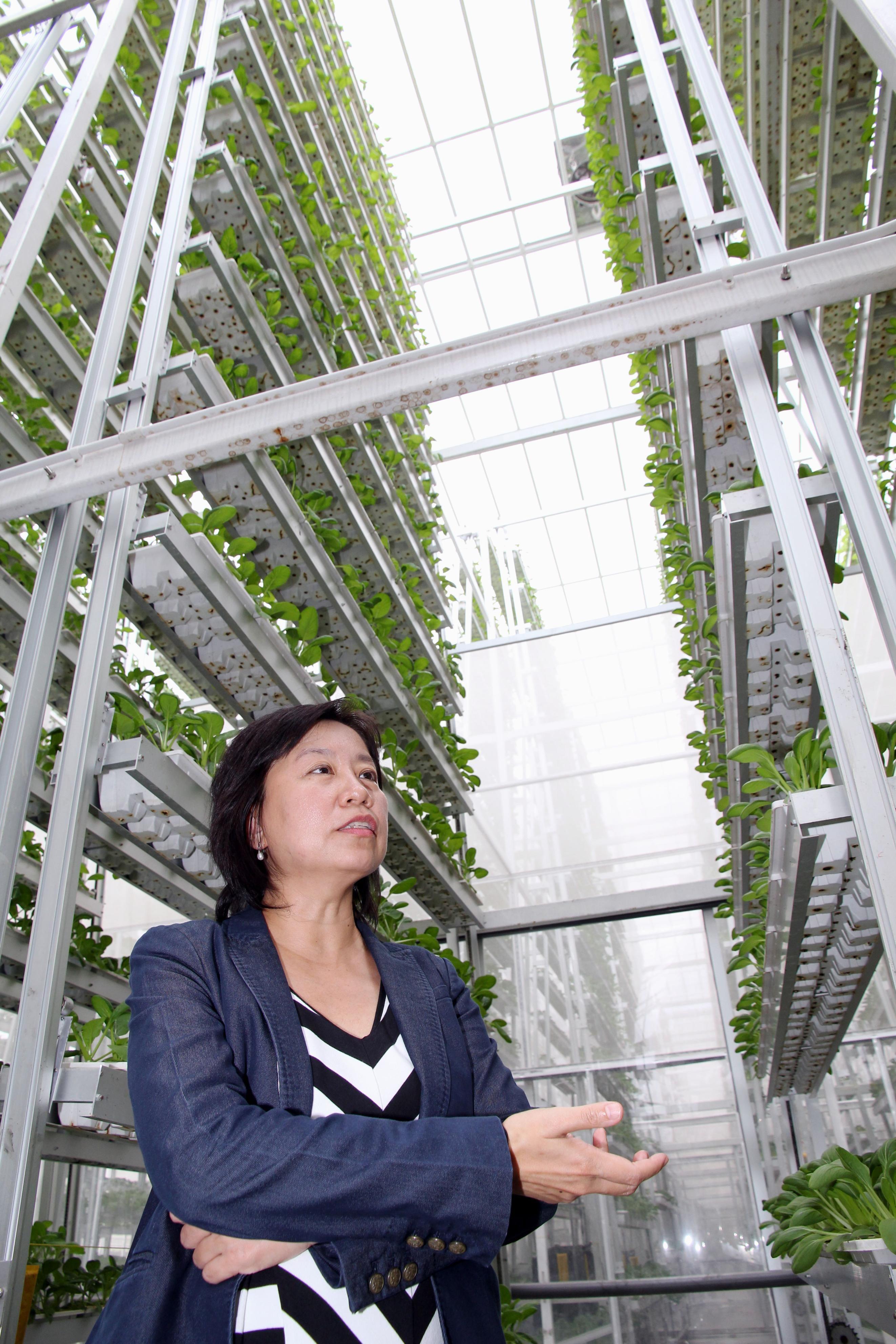 """Vertical """"hydroponic"""" farm 도시 농업, 조경, 여행"""