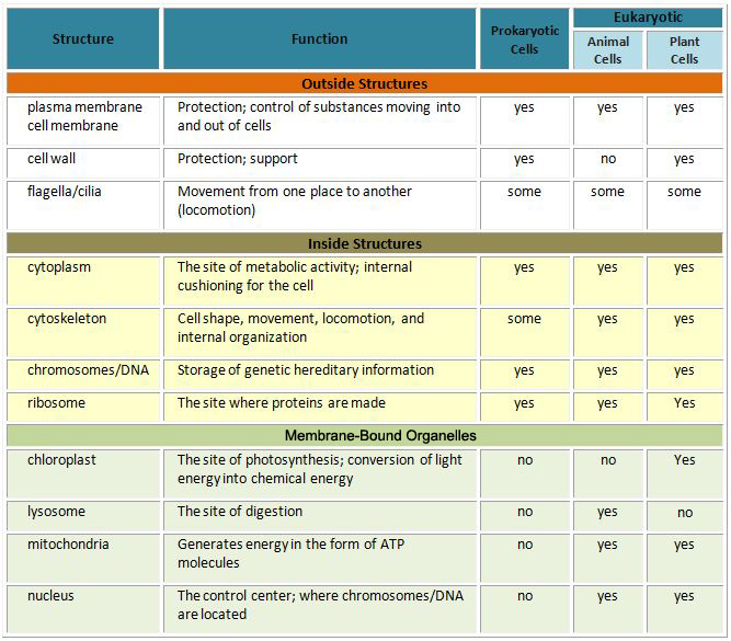 Summary of chart. Outside Structures. Prokaryotic and all