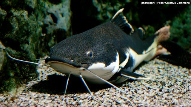 Woman allegedly smacked sister in law with dead catfish