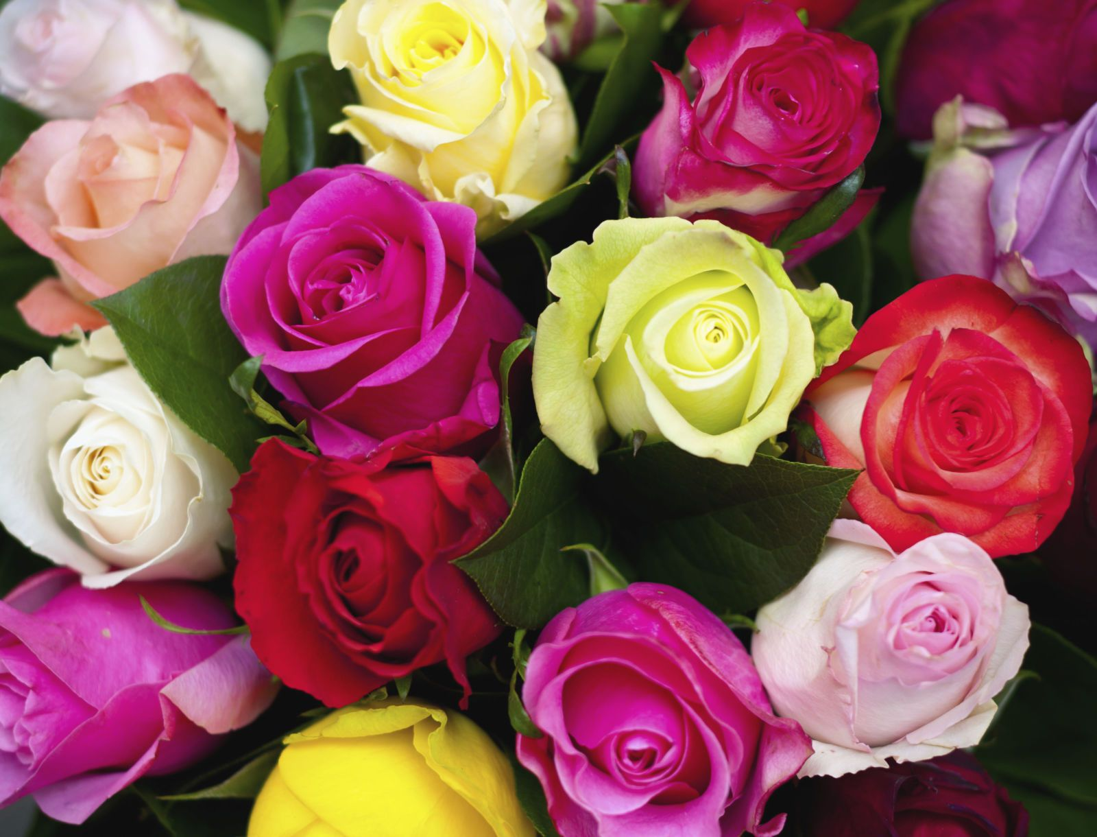 Coral Roses are The Perfect Way to Celebrate Your First Valentine's Day  Together | Yellow rose meaning, Rose color meanings, Different color roses
