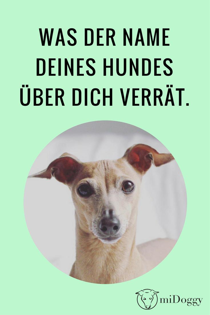 Was Der Hundename Uber Dich Sagt Midoggy Community Hundenamen Hunde Welpen