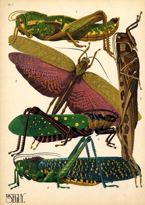 darksilenceinsuburbia:    E.A. Séguy: From   Papillons' and...