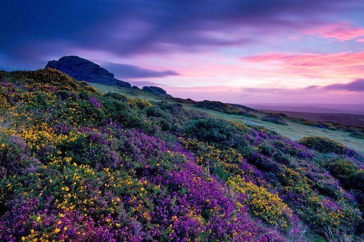 Purple Flower Field Landscape Photography