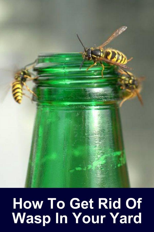 How To Get Rid Of Wasp | Get rid of wasps, Honey diy, Wasp