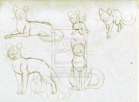 Warrior Cats Dawnclan Warrior Cat Poses 1 Dawnclan By Kasarawolf