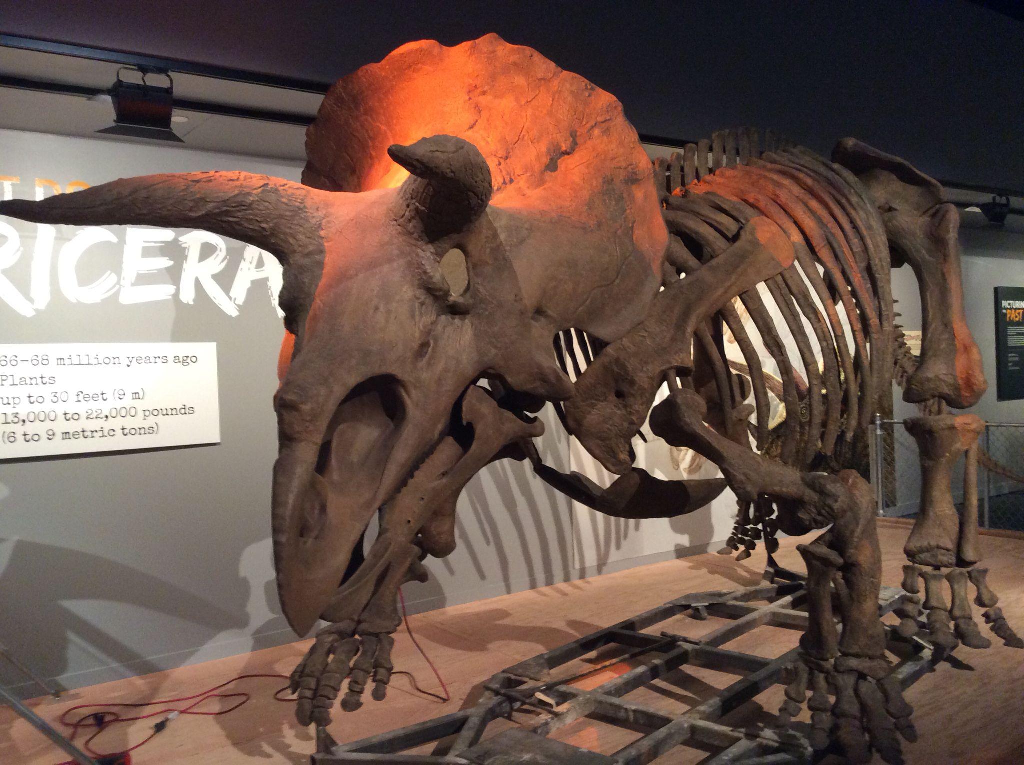 Natural History Museum Donosaur Fossils