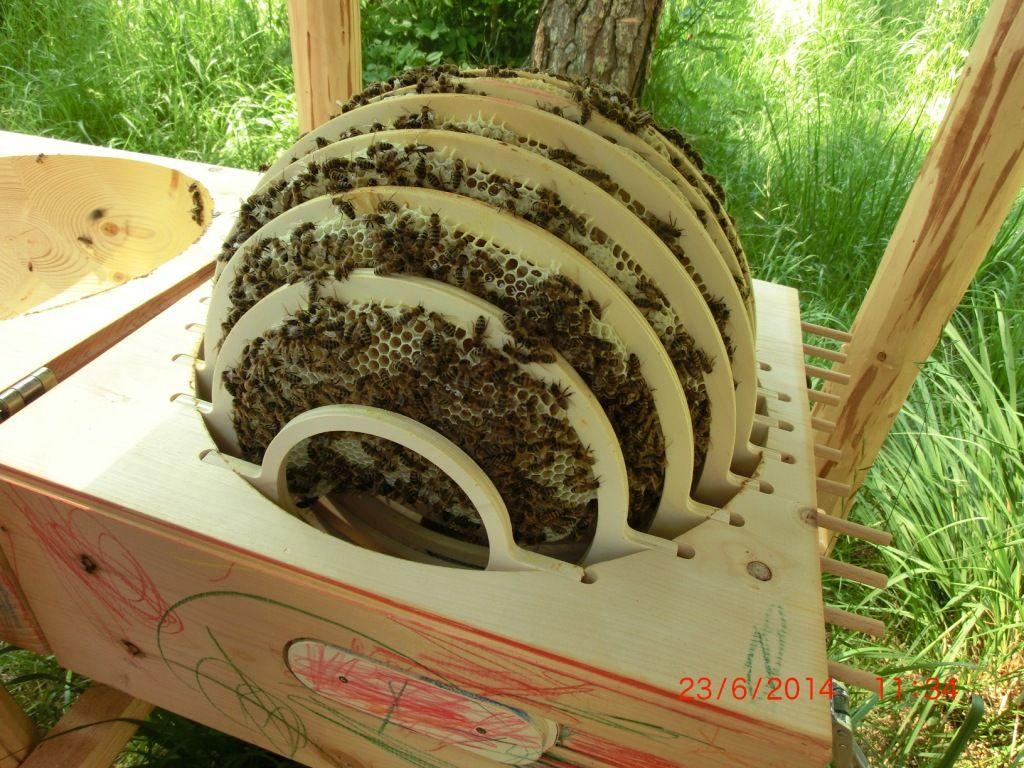 Waldkindergarten Bienen Bienenhaltung Bienenzucht