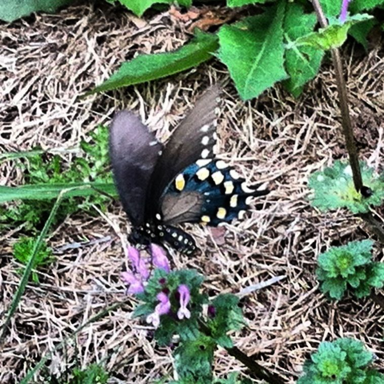 Butterfly brings me happiness!