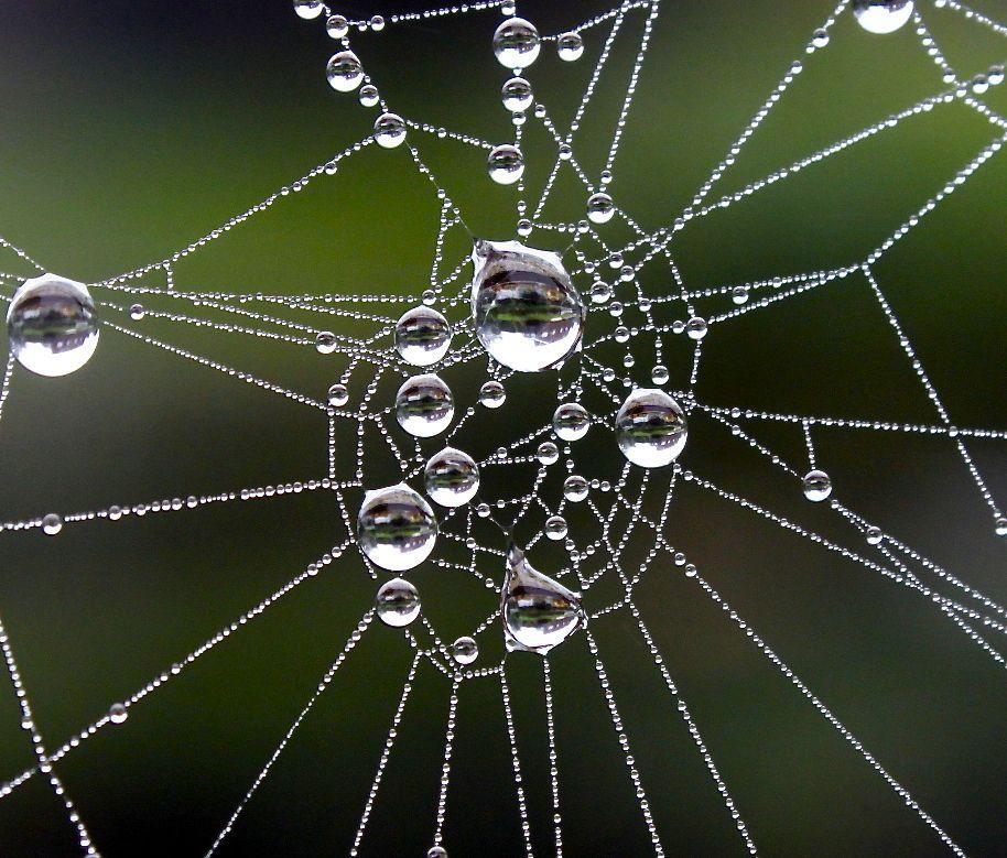 庭にて 蜘蛛の網 蜘蛛 小さな生き物 庭
