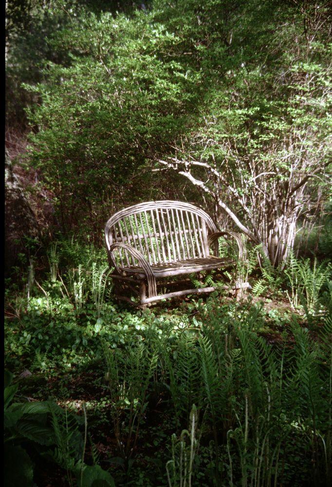 Wild garden with rustic bench