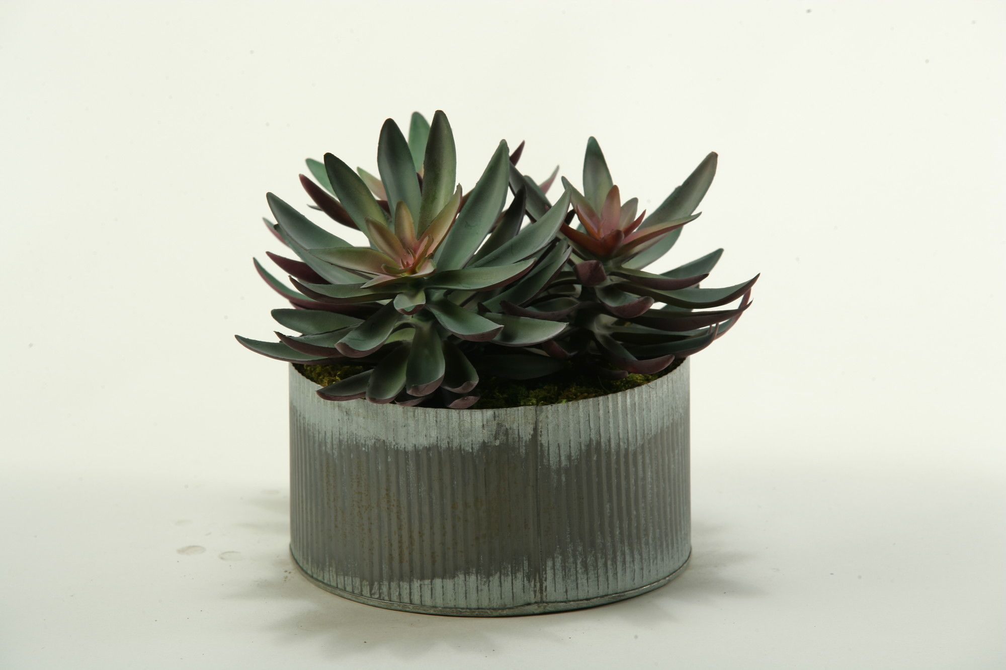 Echeveria Desk Top Plant In Planter