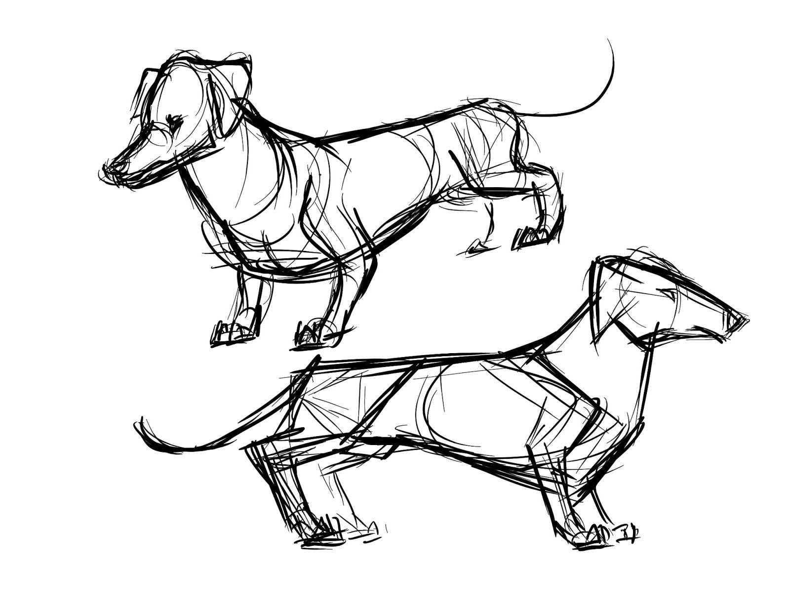 Dachshund Clube With Images