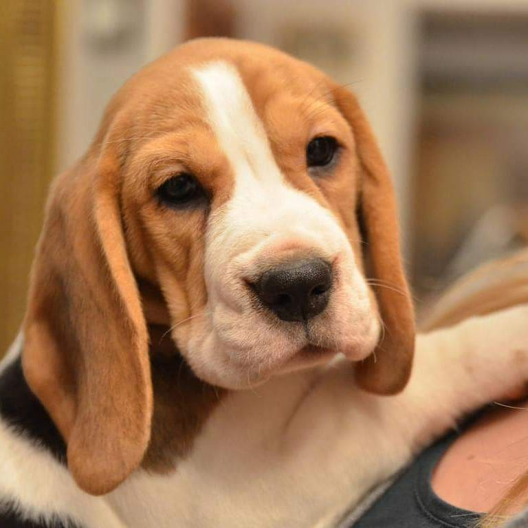 Puppy surprise Kara et ses chiots