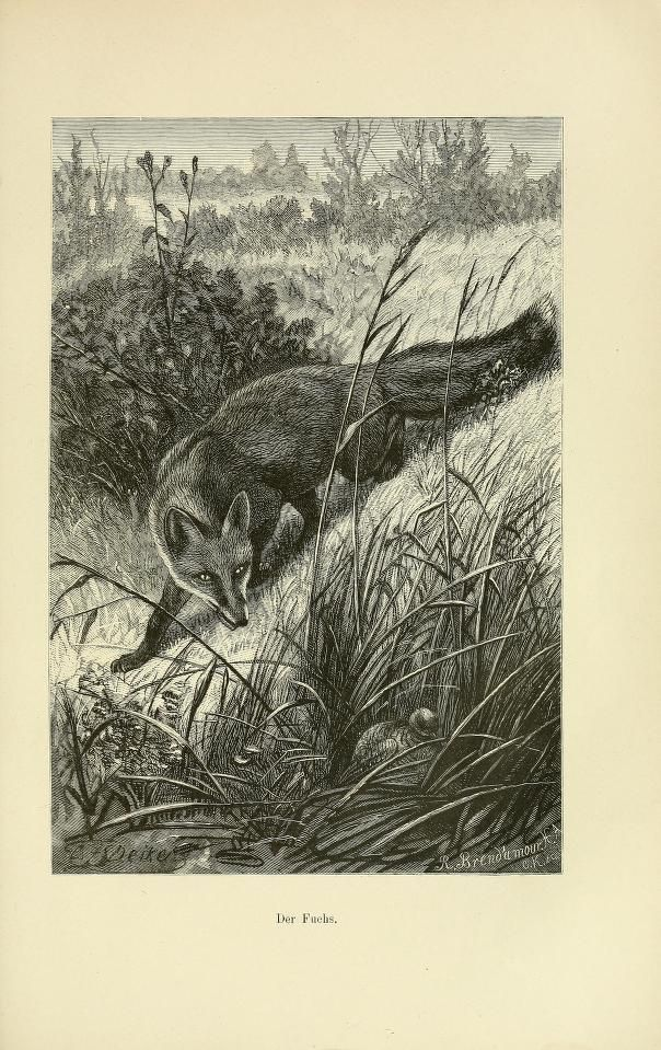 v 1 - Thiere der Heimath : - Biodiversity Heritage Library