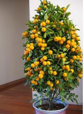 Veja 10 rvores frut feras para plantar 33