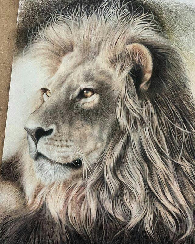 Lion Realistic Drawing : realistic, drawing, Drawings, Beautiful,, Pencil, Portrait