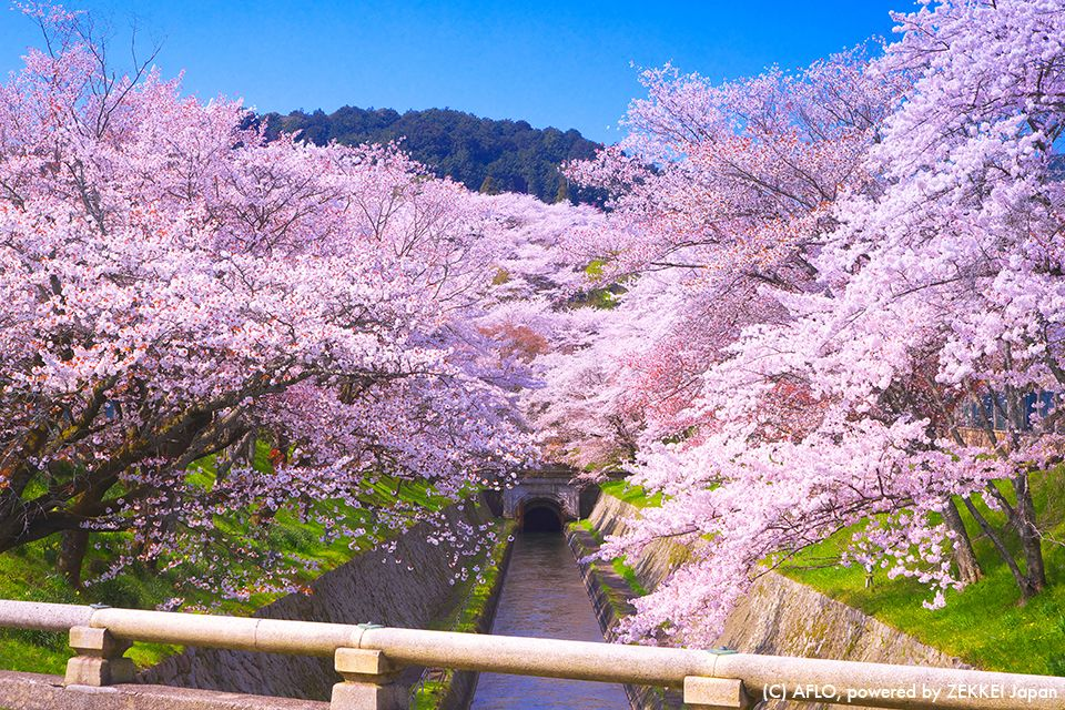 The Symbol Of Japanese Spring Is Cherry Blossoms Many People Bring Lunch Boxes And Rugs To Such Cherry Japanese Landscape Scenic Destinations Beautiful Nature