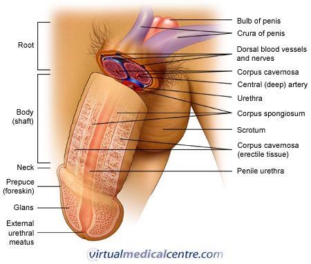 mandlig prematur ejakulation