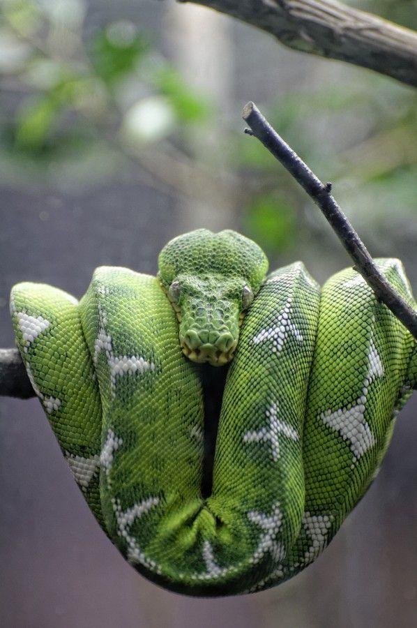 Pin de Orion Gonzalez en Animals---Land | Pinterest | Serpientes ...