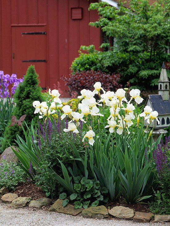 Tough perennials that grow in dry shade gardens for Easy maintenance perennials