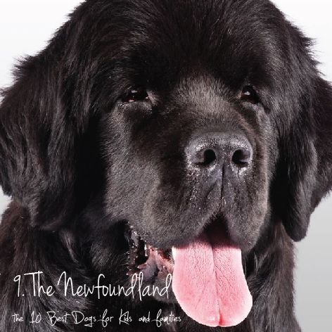The Newfoundland Nicknamed Nature S Babysitter The Newfoundland
