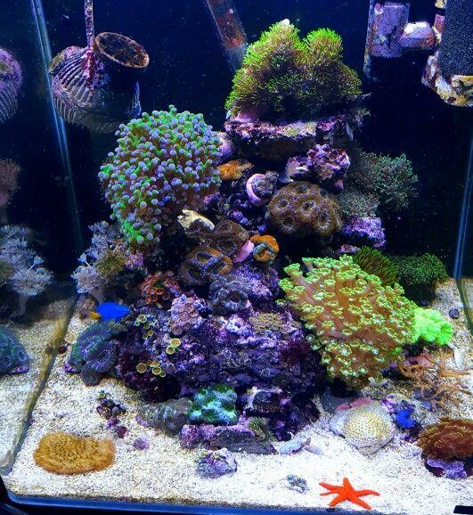 nano reef aquarium seastar meerwasser reeftank meerwasser aquarium meerwasser aquarium. Black Bedroom Furniture Sets. Home Design Ideas
