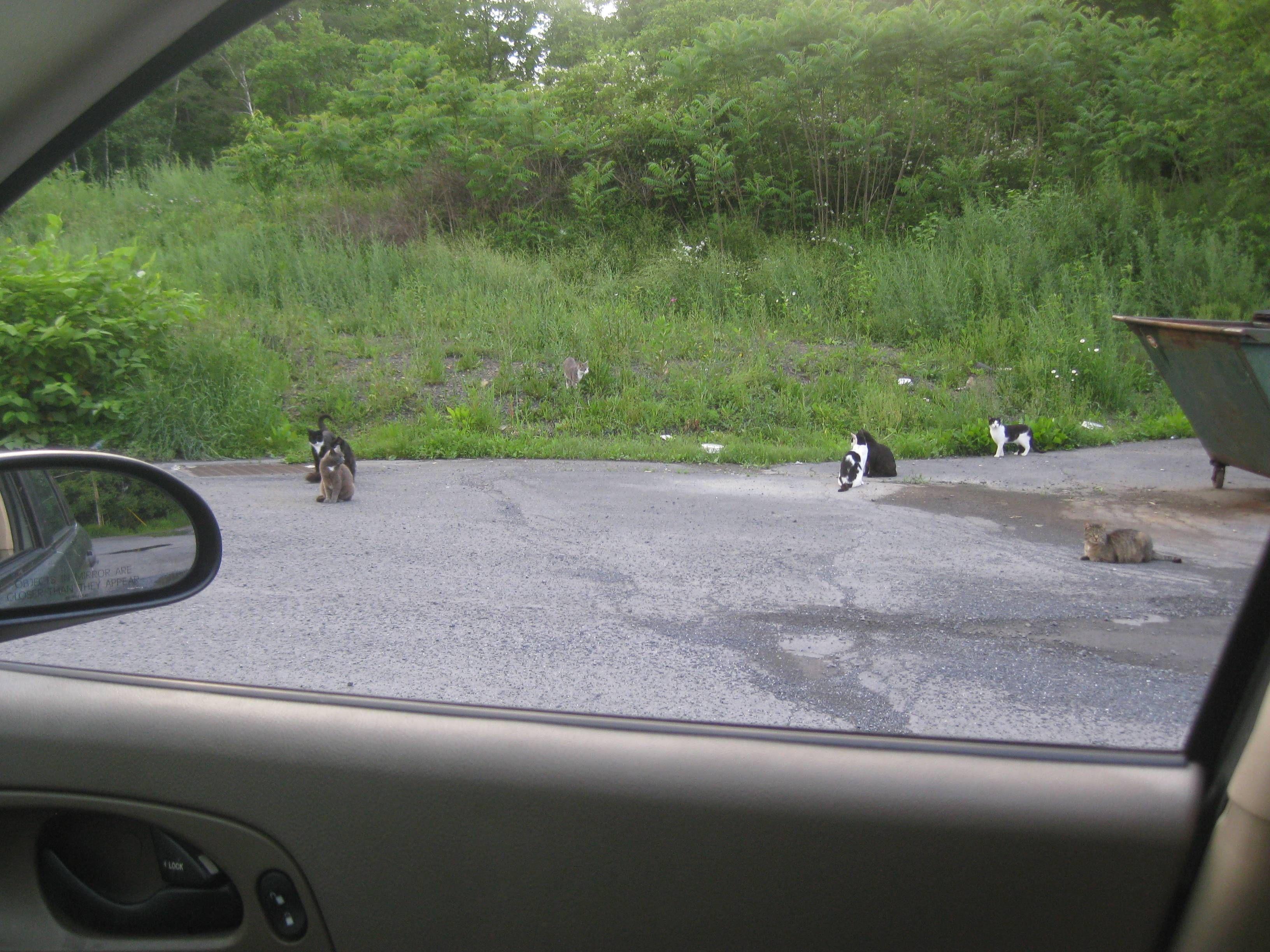 I think I'm in the wrong neighborhood....