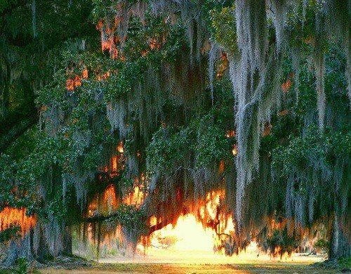 Live Oak Sunrise, Mandeville, Louisiana