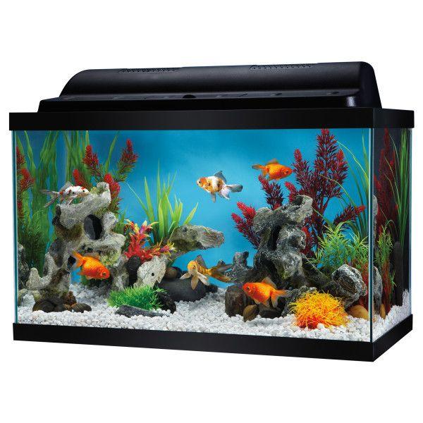 Top fin 10 gallon aquarium kit aquariums petsmart for 10 gallon fish tank kit