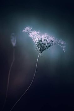LeFurge Nature Preserve in Michigan by Paul Barson - Google Search
