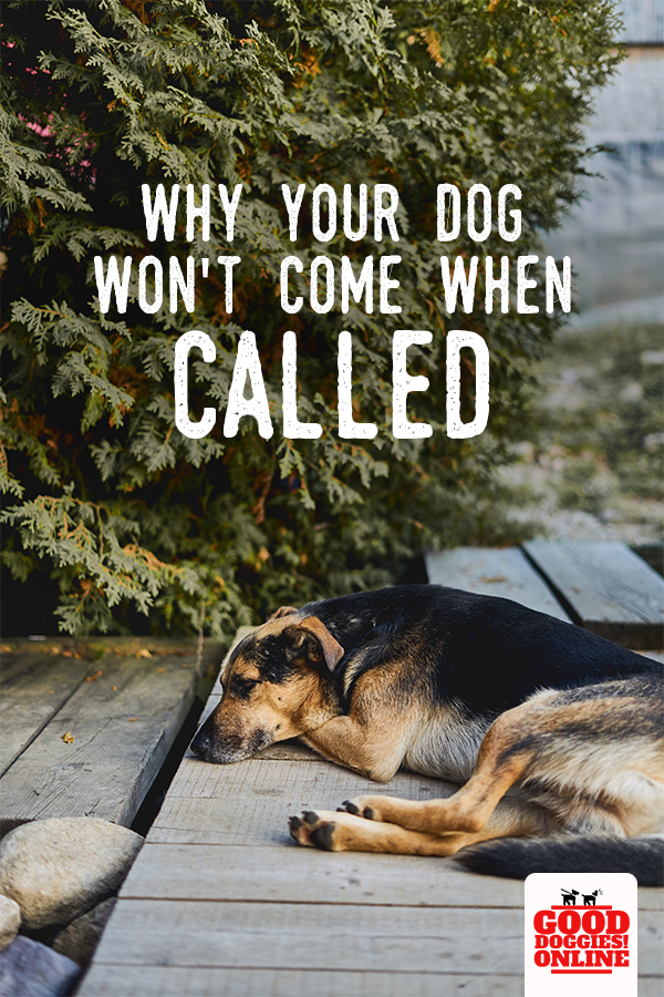 This Is Why Your Dog Won T Come When Called Good Doggies Online Dog Training Training Your Dog Dog Training Obedience